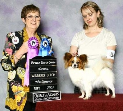 Dolly Winners bitch at Papillon Canada