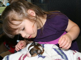 Granddaughter Kylie with Newborn Papillon